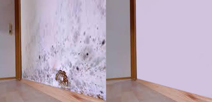 mold-damage-repair